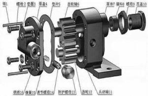 齿轮泵内部